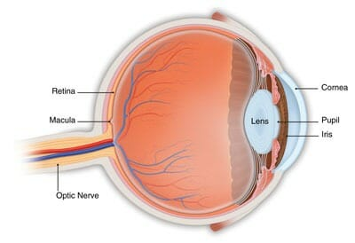 Age-Related Macular Degeneration Diagram