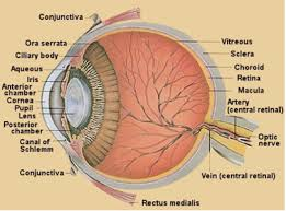 Detailed Diagrams Of The Eye And Its Components Beaumont
